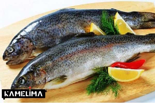 ماهی قزل آلا بسیار مفید برای تولید شیر مادر